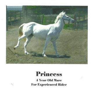 Quarterhorse - Princess - Large - Young - Female - Horse