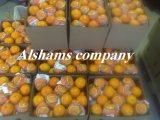 برتقال طازج بجوده عاليه